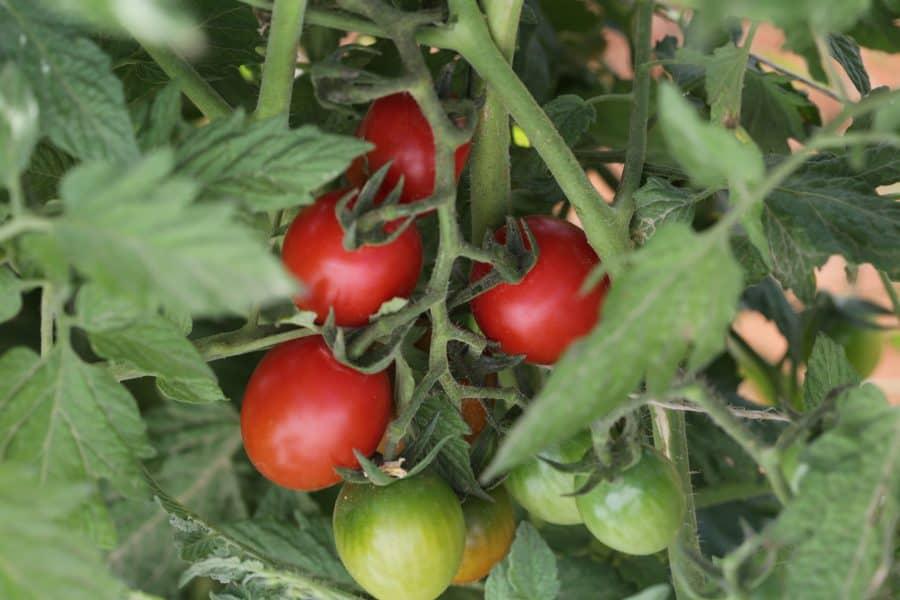 הזנה אורגנית לצמח ולקרקע